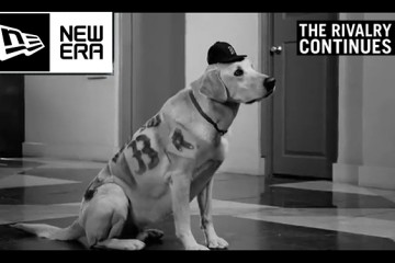 New Era Dog