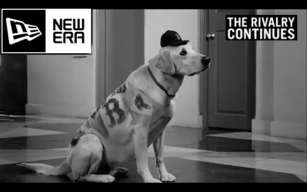 New Era Dog