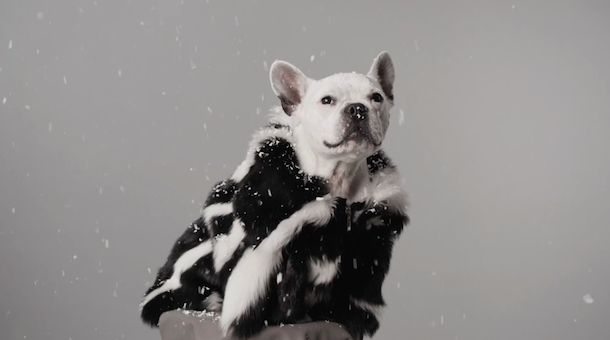 Phillip Lim casts his dog in the 3.1 Phillip Lim Digital Christmas Card