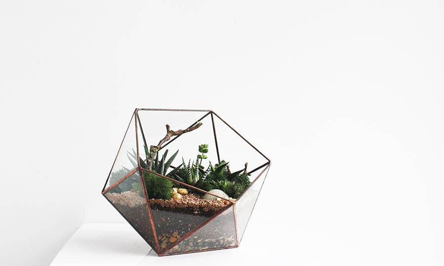 crown-flora-terrarium